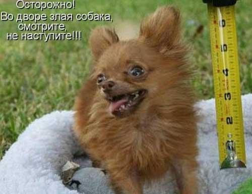Приколы про собак - фото с надписями