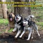 Приколы про собак — фото с надписями