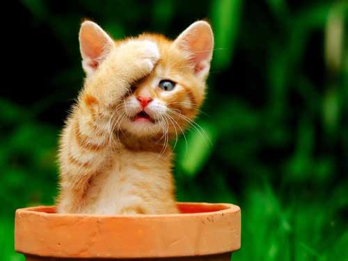Красивые и смешные картинки про животных