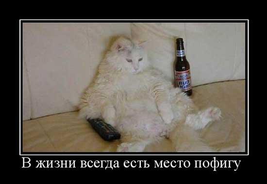 http://razvlecuxa.ru/wp-content/uploads/2015/06/statusy_pro_pofigizm_01.jpg