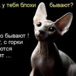 Прикольные коты — фото с подписями