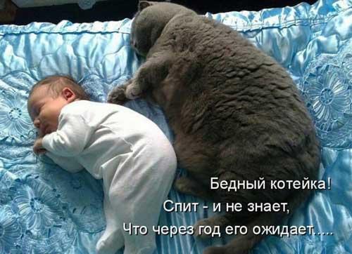 Прикольные коты - фото с подписями