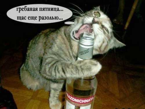 Пьяная пятница - приколы
