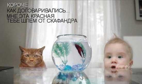 Приколы про детей и животных