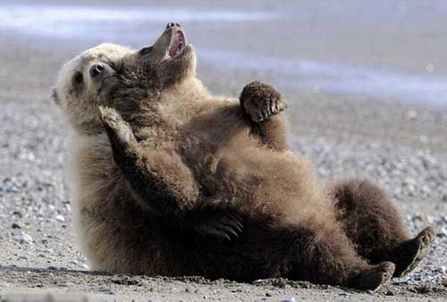 Смешные фото медведей