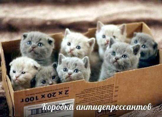 foto_pro_kotyat_15.jpg