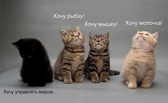 foto_pro_kotyat_16.jpg