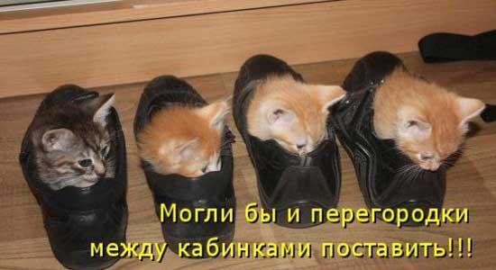 Фото приколы про котят