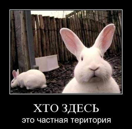 Прикольные фото зайцев