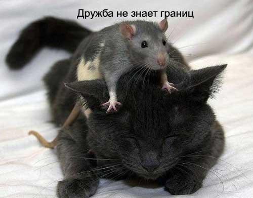 Смешные картинки про дружбу с надписями