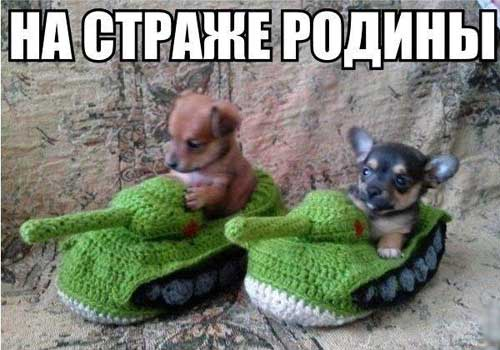 Смешные картинки с собачками