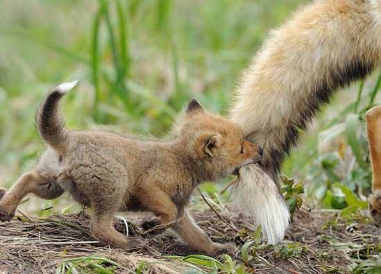 Прикольные картинки маленьких животных