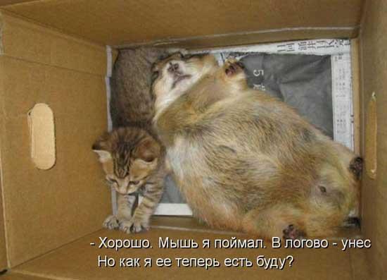 картинки приколы смешные про животных