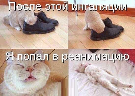 Смешные картинки-приколы с надписями про животных