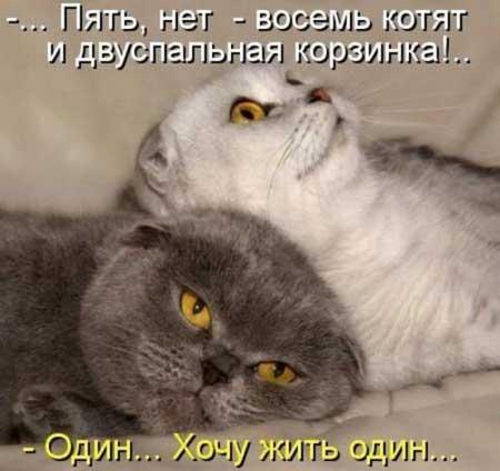 Картинки прикол про котов