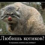 Анекдоты о котах