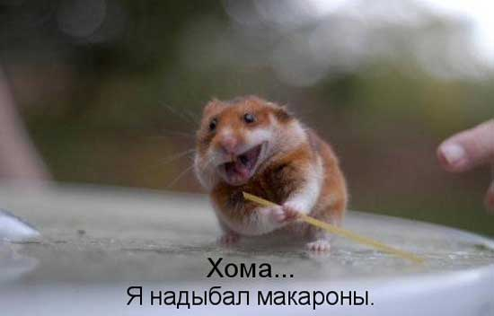 Смешные фото хомячков