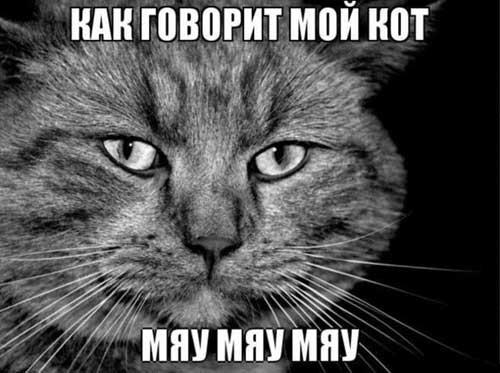 Смешные цитаты с котами