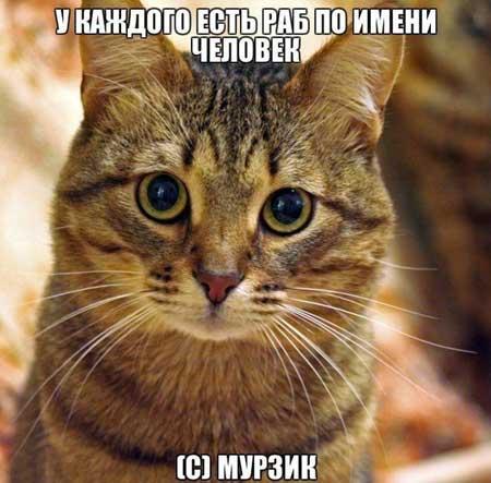 Смешные фразы про котов