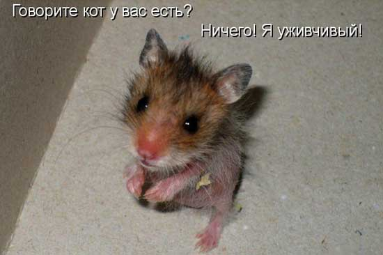 Смешные картинки мышек