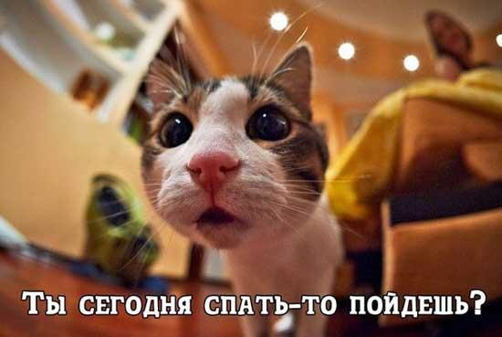 Андрей Григорьев-Аполлонов - биография - актёры 50