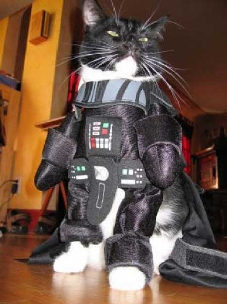 Смешная одежда для кошек