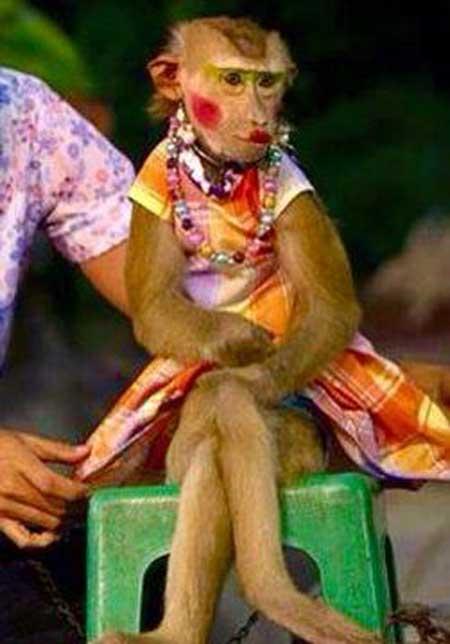 Прикольные фото обезьян с косметикой