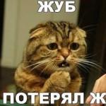 Прикольные коты — фото с надписями