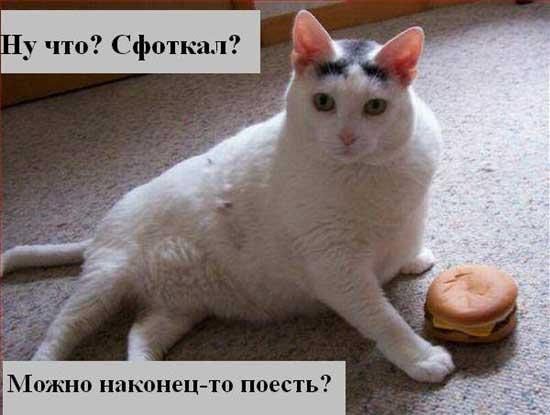 Прикольные коты - фото с надписями
