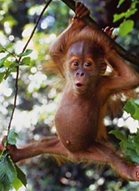 Фото прикольных обезьянок