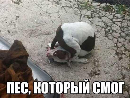 Прикольные картинки с собаками