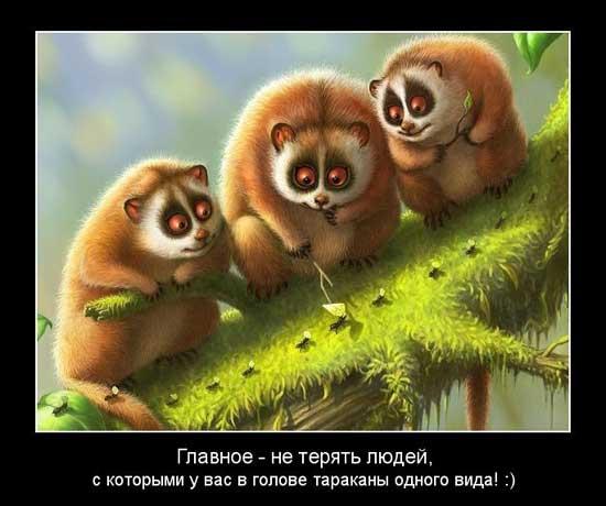 Смешные выражения про дружбу