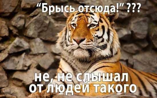 Смешные картинки с надписями про животных