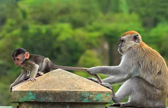 Веселые картинки про животных