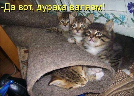 Котята с прикольными надписями